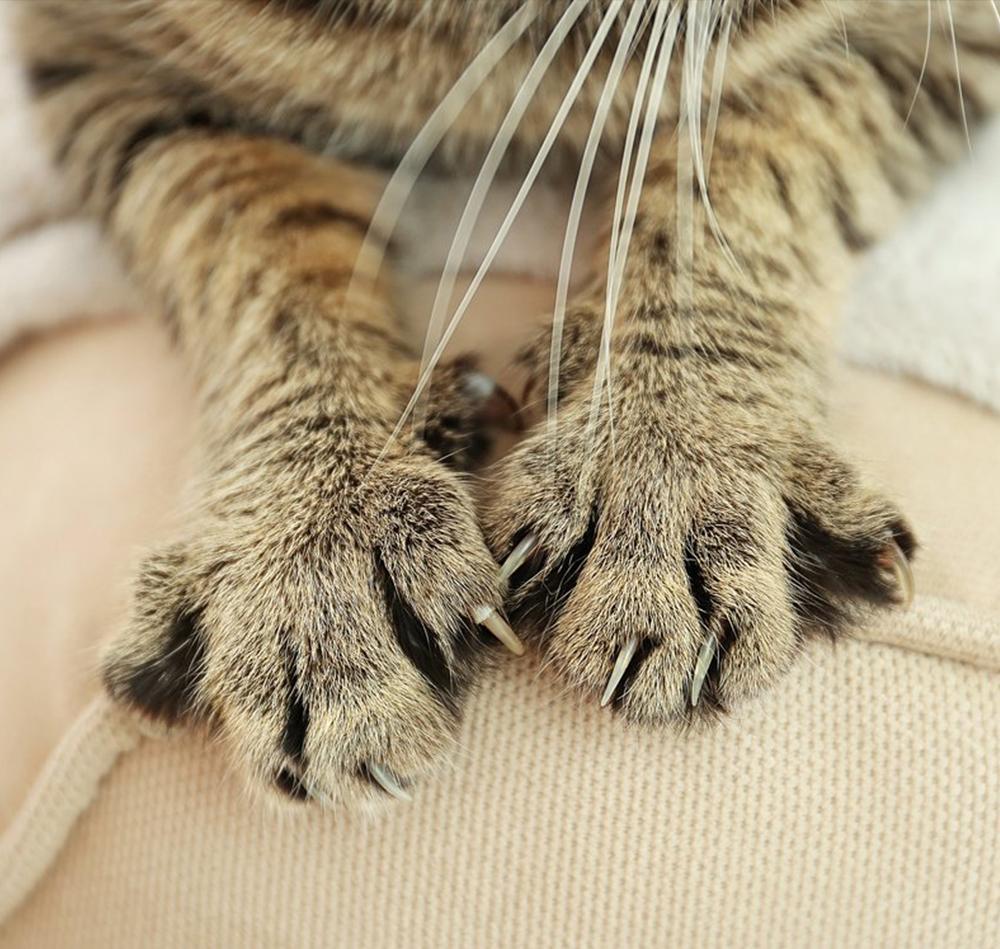 Kako zaštititi garnituru od mačjeg grebanja?